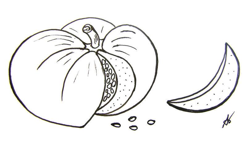 Legumes l 39 atelier de jojo - Dessin courge ...